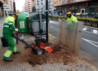 reposición árboles gandia