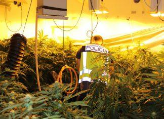 laboratorio marihuana gandia